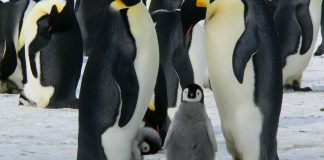 discover the world - happy feet film